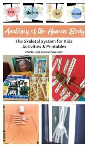 Anatomy of the Human Body ~ The Skeletal System for Kids Activities & Printables