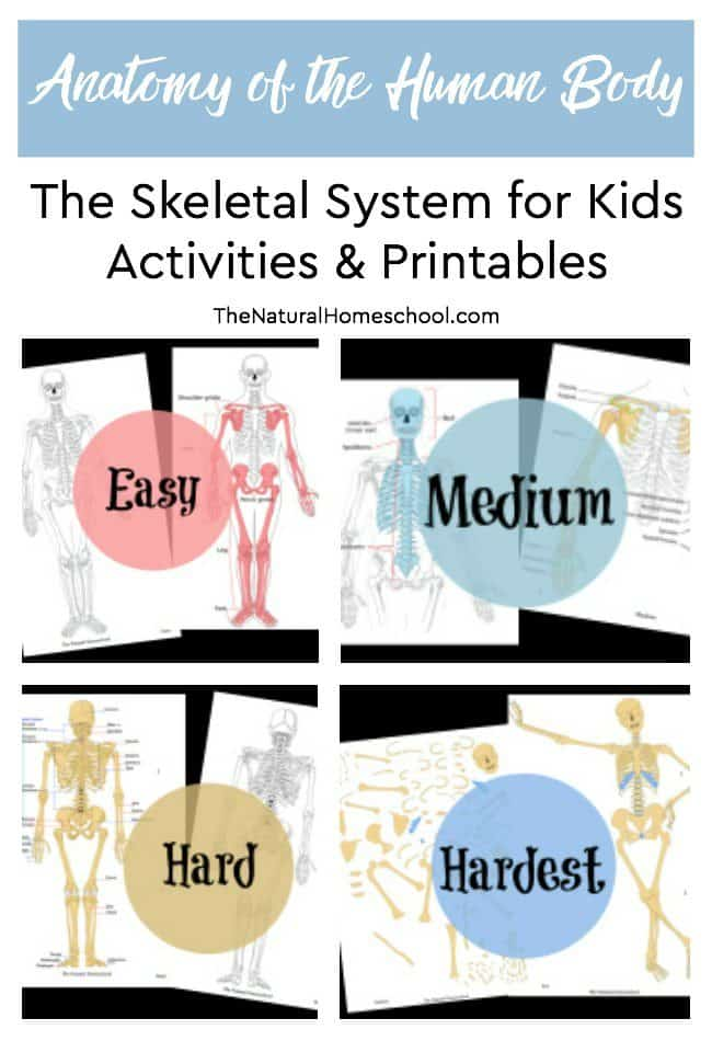 Here is an awesome Science lesson on the anatomy of the human body! This time, we will be looking at some funactivities and printables about the Skeletal System for kids to learn more about what holds their body up!