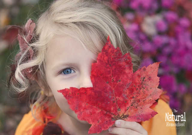 Today, we share with you 10 Fall nature activities. We also include 2 free Fall printable pictures set at the end of this post, so be sure to take those.