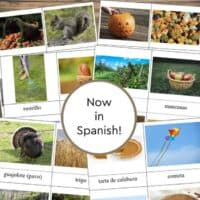 Fall Printable Pictures in Spanish ~ 3-Part Cards