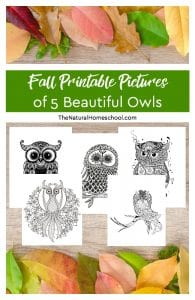 Fall Printable Pictures of 5 Beautiful Owls