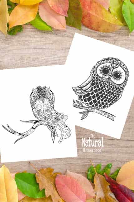 Take a look at these beautiful Fall printable pictures of 5 beautiful owls that kids can just color or they can transform into an amazing work of art.