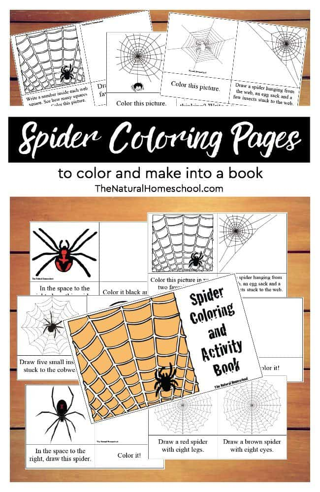 These printable spider coloring pages are awesome! Get them for free here!