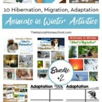 10 Hibernation, Migration, Adaptation Animals in Winter Bundle #2