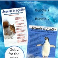 Animals in Winter Bundles 1 & 2 DEAL (Hibernation, Migration, Adaptation)