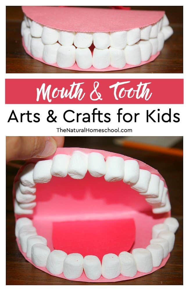 In this post, we will show you how we made some really fun mouth & tooth arts & crafts for kids to learn the names and locations of teeth! The best part? The teeth are made out of mini marshmallows!