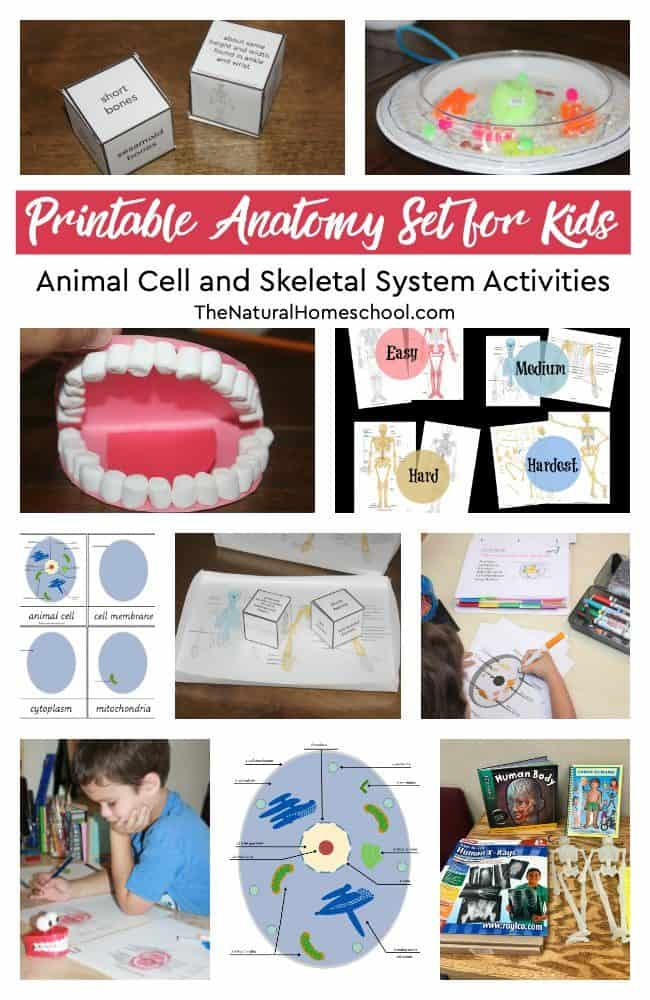 Here is a wonderful Science set of printable activities for kids to learn the most about the Animal Cell and the Skeletal System activities are amazing! Take a look at this bundle!