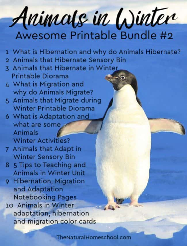 Take a look at these funanimals in Winter printables! Learn all aboutHibernation, Migration, Adaptation with this amazingAnimals in Winter Bundle #2!