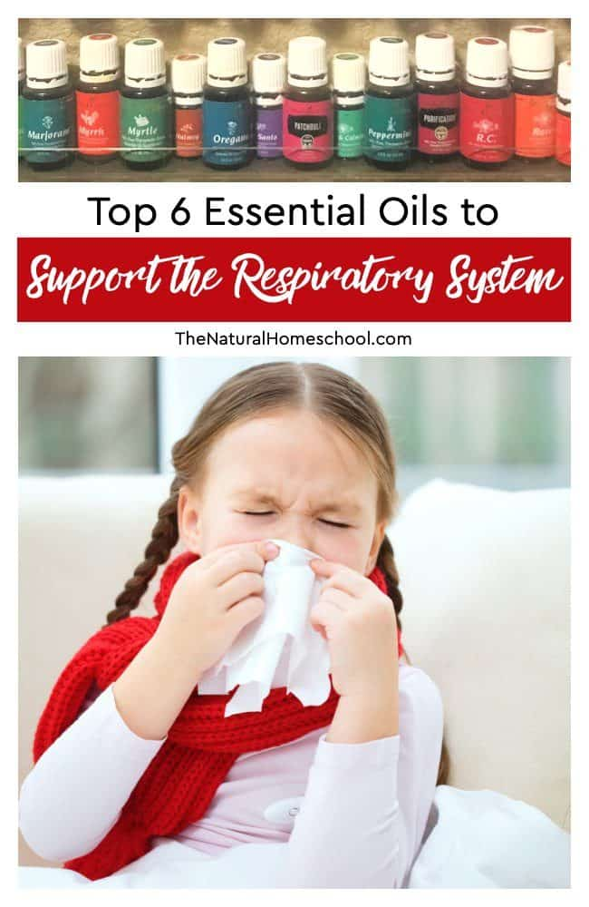 In this post, we will share with you 6 top essential oils to support the Respiratory System.