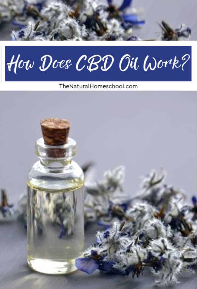 How does CBD oil work? Are you wondering how CBD oil works? What are the CBD oil effects and what benefits do people get from it?