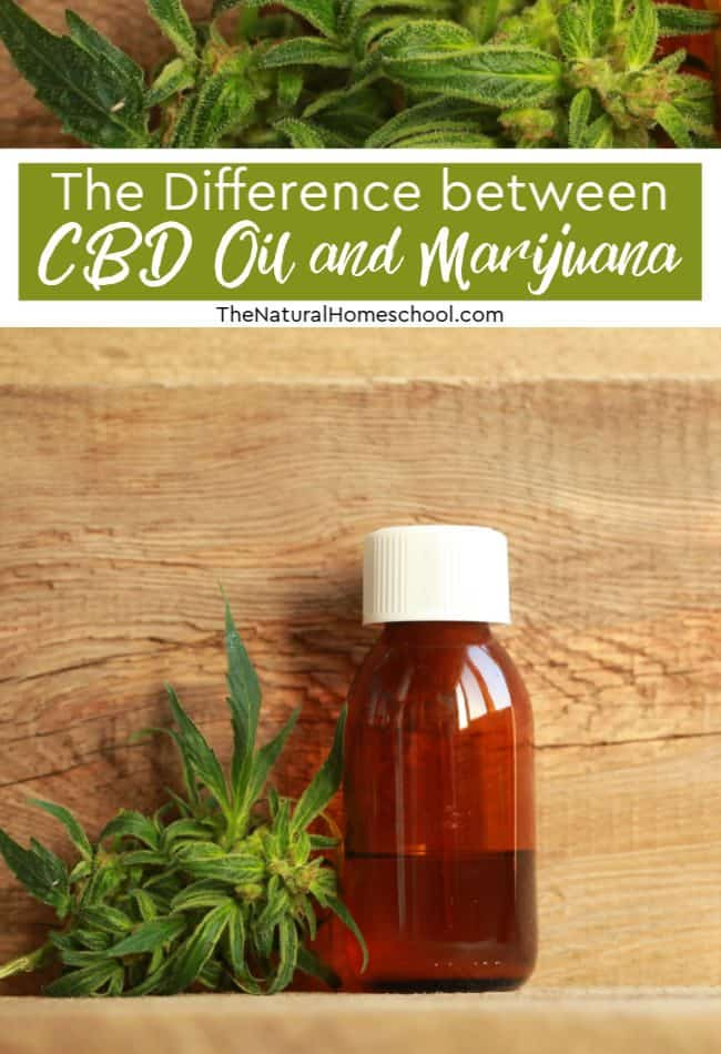 In the talk about CBD oil, one conversation we definitely need to have is about the different between CBD oil and marijuana.