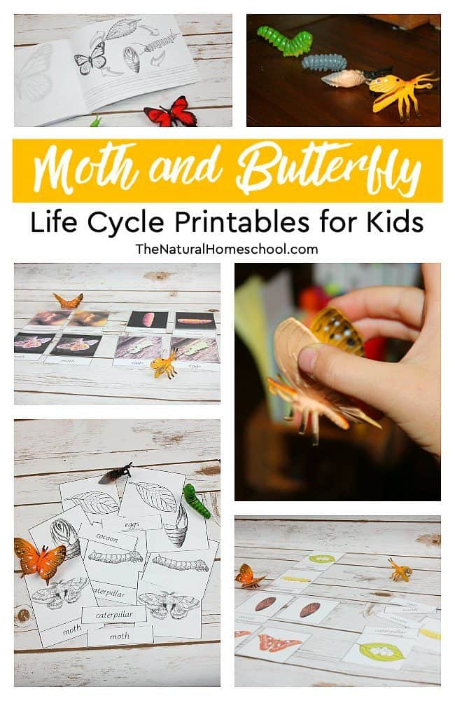 You can get some freebies today and also get the chance to get the units on moth and butterfly life cycle printables for kids to learn and love!