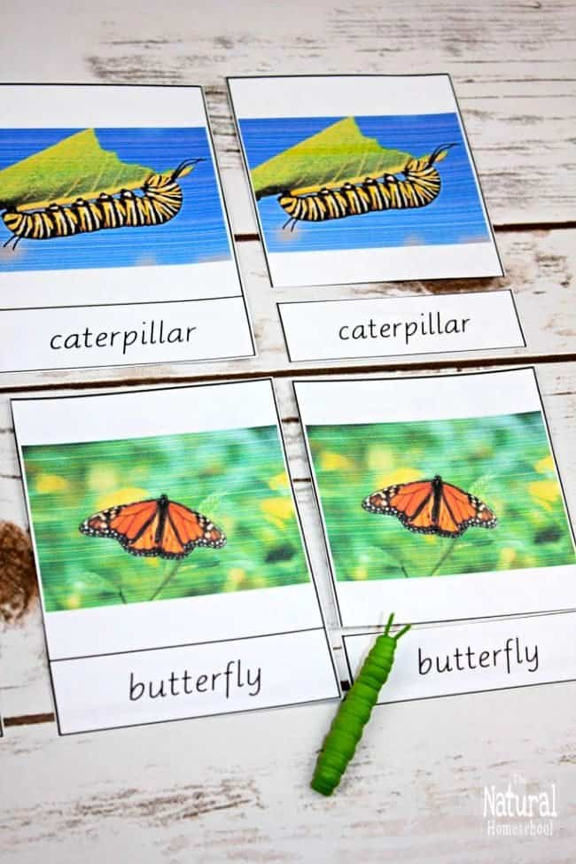 It is so exciting to have made these 12 fun and educational activities with my kids! They really enjoyed them and they learned so much! I think you will like them, too and your kids will also learn so much about the life cycle of a butterfly for kids with printables!