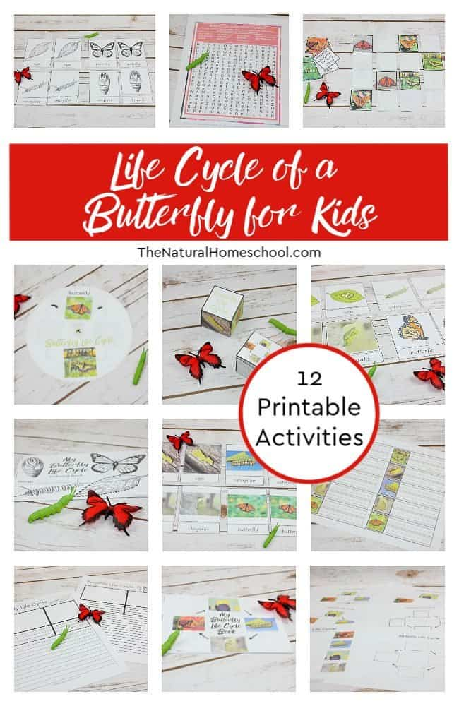 Life Cycle Of A Butterfly For Kids Printables The Natural Homeschool