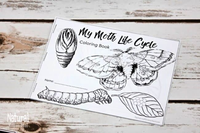 If you are like me and you have been looking for moth life cycle printable activities that kids can do to learn more about metamorphosis, then look no further!