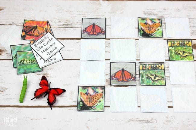 I am excited about making fun butterfly life cycle educational activities with my kids! Check out 12 of the greatest life cycle of a butterfly printables!