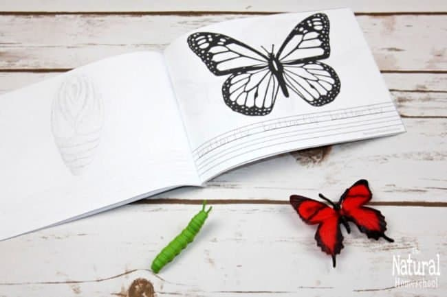 In this post, I will be sharing with you some precious activities and ideas for you to teach your kids about the miracle of metamorphosis! This sensational butterfly life cycle book printable will blow your mind! Here is our butterfly life cycle lesson plan!