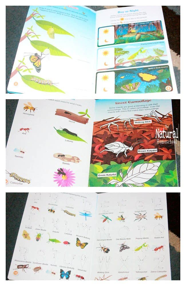 In this post, I will show you several beautiful ways to learn about the characteristics of insects, including fun hands-on activities. I hope you enjoy it as much as we did!