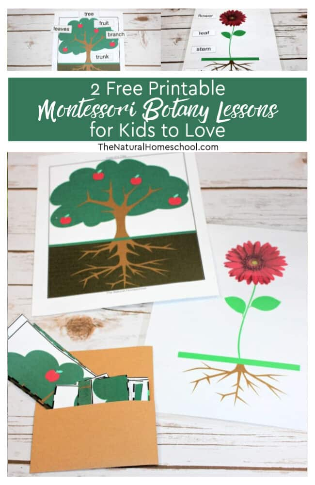 Come and take a look at our 2 free printable Montessori Botany lessons for kids to love! We hope you enjoy these ideas and that your children will learn about plants and trees.