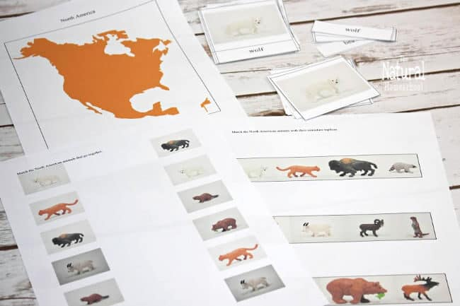 Here is part of our lesson on animals from North America. Read on to see our terrific photos of animals of North America Montessori printables!