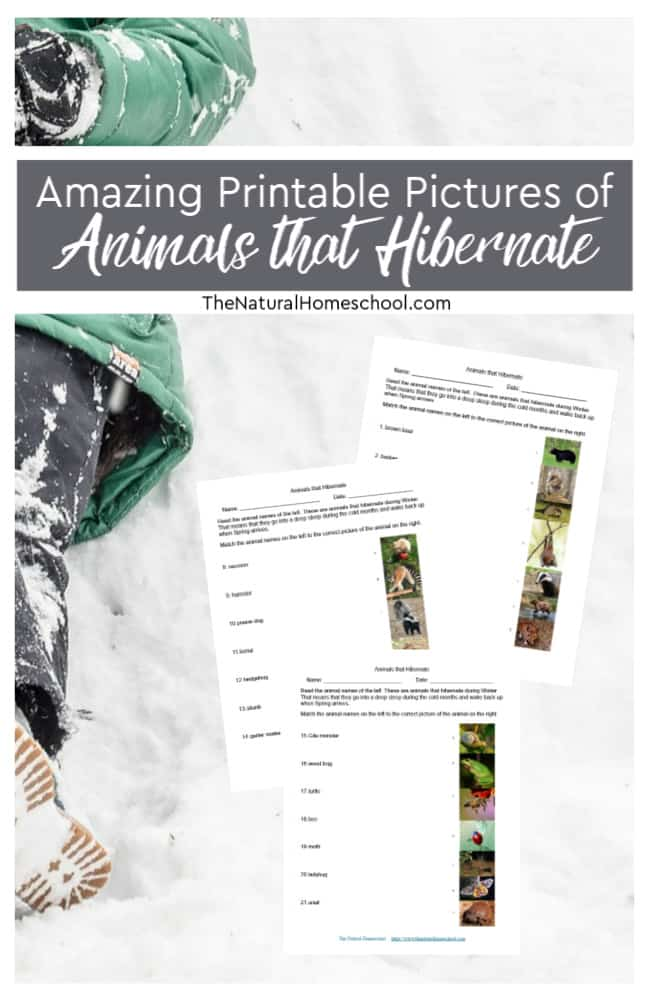 Come and take a look at this printable activity about matching names and pictures of animals that hibernate.