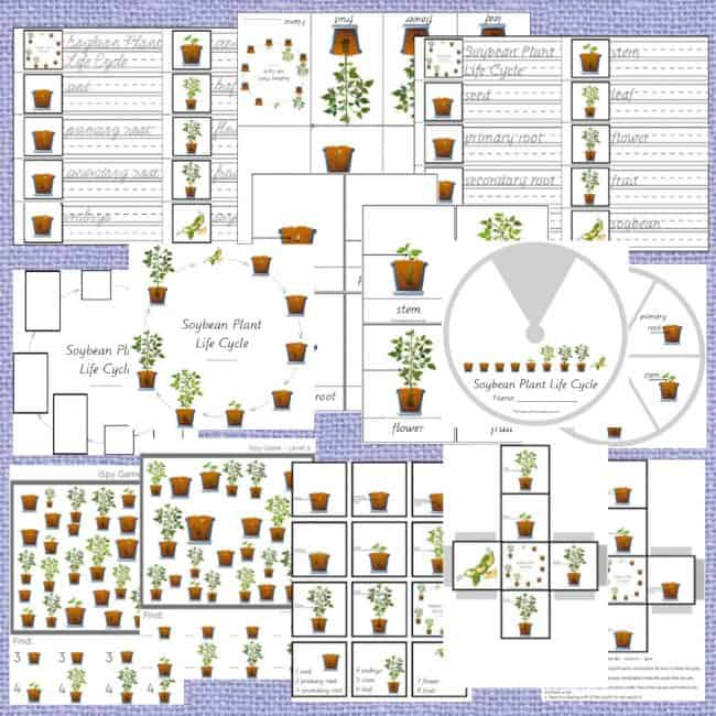 Let me tell you about this Soybean Plant Life Cycle for Kids. It is truly a great printable plant life cycle bundle!