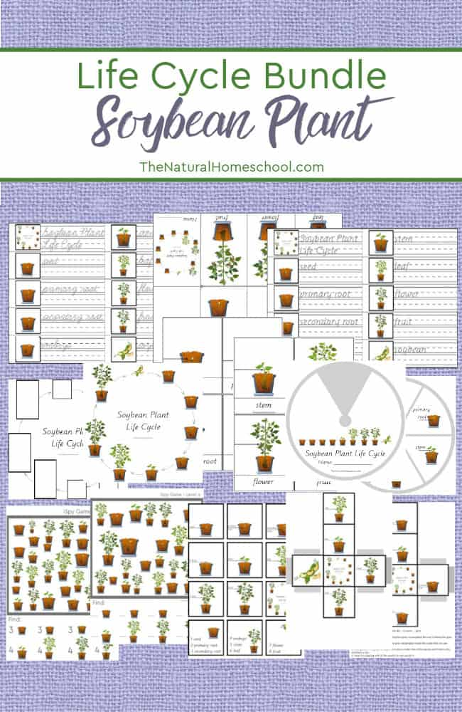 Come and take a look at our fantastic printable Soybean Plant Life Cycle Worksheets and Activity Set that your kids will love!