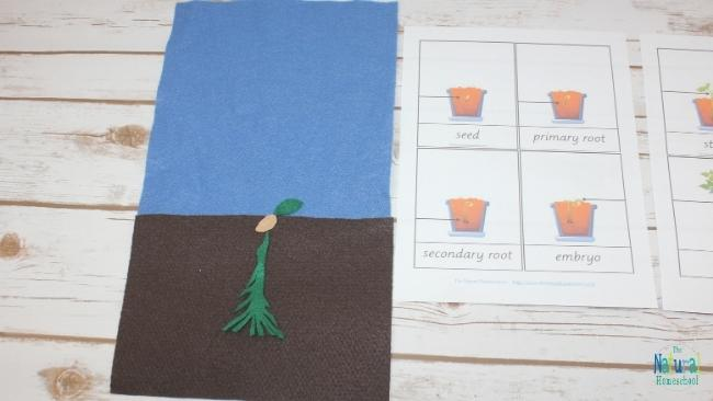 In this post, we will be talking about theplant life cycle for kids that is interactive and hands-on. Instead of getting a plant life cycle worksheet, why not make an easy felt craft?