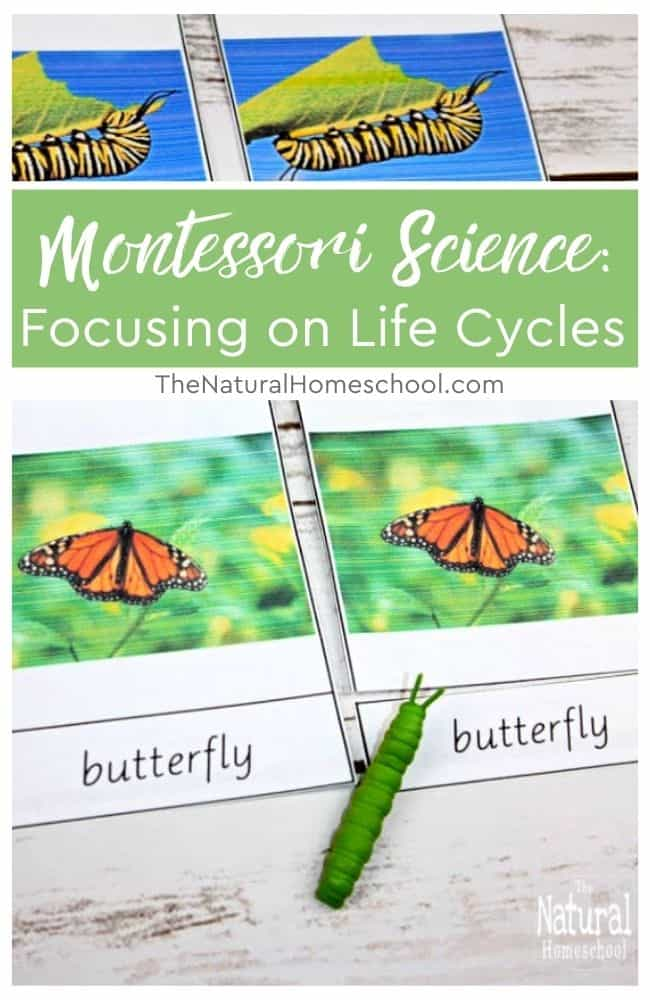 In this training, we will be focusing on how to go about using life cycle activities for Montessori Science, whether it is Botany or Zoology.